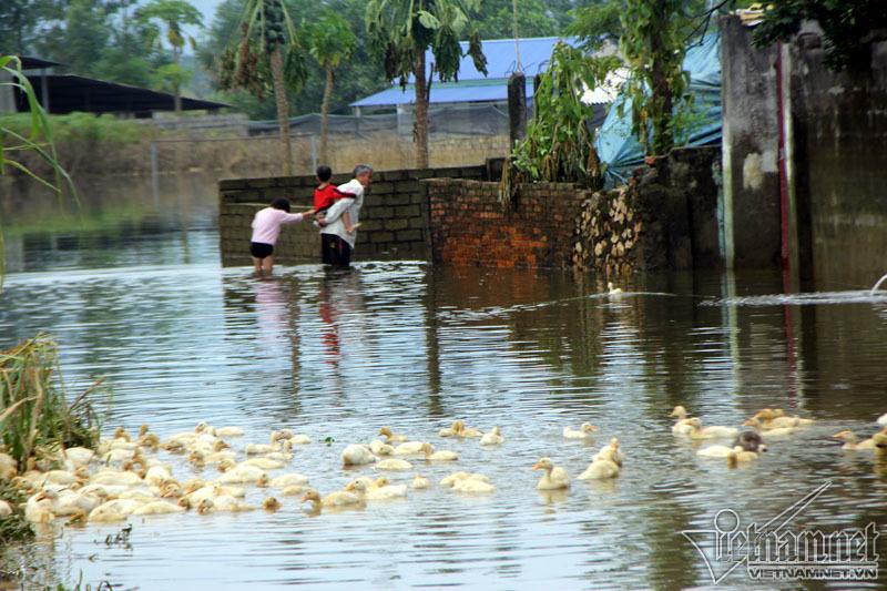 vỡ đê,ngập lụt,lũ lụt,thiên tai,vỡ đê Bùi,vỡ đê ở Chương Mỹ,Hà Nội