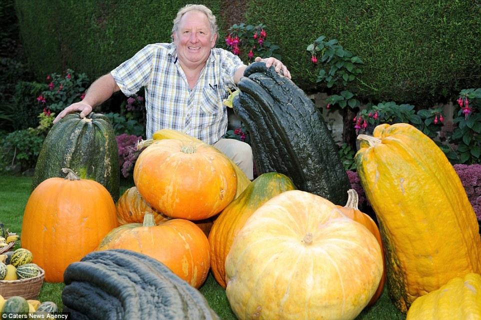 Rau, củ quả siêu khủng: Cải bắp đường kính 9m, bí ngô nặng 44kg