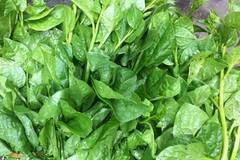 Phát hiện rau trong bếp ăn trường mầm non nhiễm thuốc bảo vệ thực vật