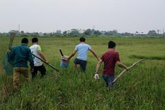 Trai tráng hò nhau bắt chuột làm mồi nhậu, huyên náo cả cánh đồng