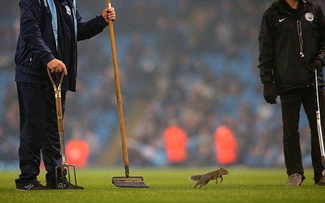 Man City, Wolves, Cup Liên đoàn Anh
