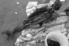 Xẻ thịt cá heo trên bãi biển Đồ Sơn