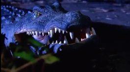 Trò chơi cá sấu lên bờ phiên bản 'cún cưng'