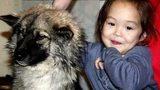 Chú chó quên mình cứu cô chủ nhỏ khiến dân mạng xúc động