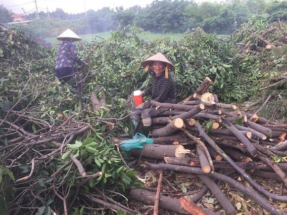 Những 'tiều phu' mưu sinh ở Sài Gòn