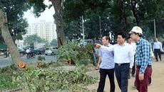 Chủ tịch HN bất ngờ thị sát việc đốn nghìn cây đường Phạm Văn Đồng