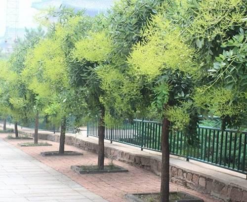 Sắp hết năm, trồng ngay những cây này trước nhà để đón nhiều tài lộc