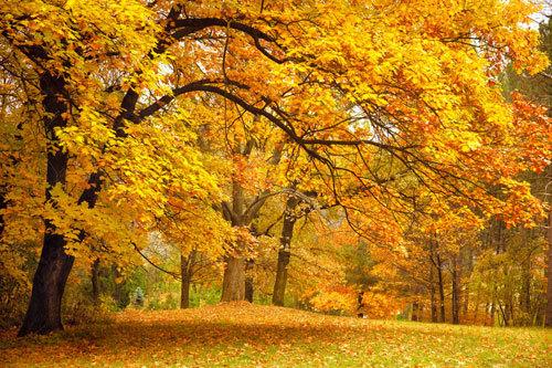 8 Essential Autumn Idioms - 8 thành ngữ mùa thu cực hữu dụng trong tiếng Anh
