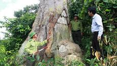Báu vật nghìn năm tuổi giữa Vườn quốc gia