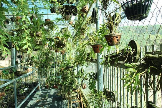Treo vườn lan rừng 'sang chảnh' vừa làm và chơi cũng kiếm 1,8 tỷ đồng/năm