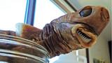 Bị cá mập siêu hiếm cắn, bé trai chịu vết thương kỳ lạ
