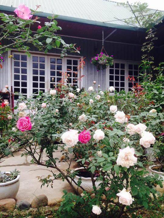 Mê mẩn ngôi nhà hoa hồng đẹp như cổ tích trên cao nguyên đá Hà Giang