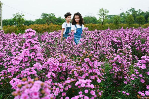 Giới trẻ háo hức với thảo nguyên hoa giữa lòng Hà Nội