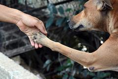 """Chú chó chấp nhận bị """"hành hạ"""" để được ăn"""