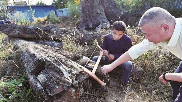 Vớt khúc gỗ trôi sông, bất ngờ được báu vật 70 tỷ đồng