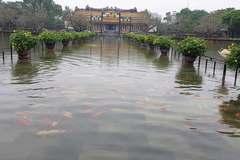 Đàn cá ngàn con bơi trong nước lũ ở Đại nội Huế