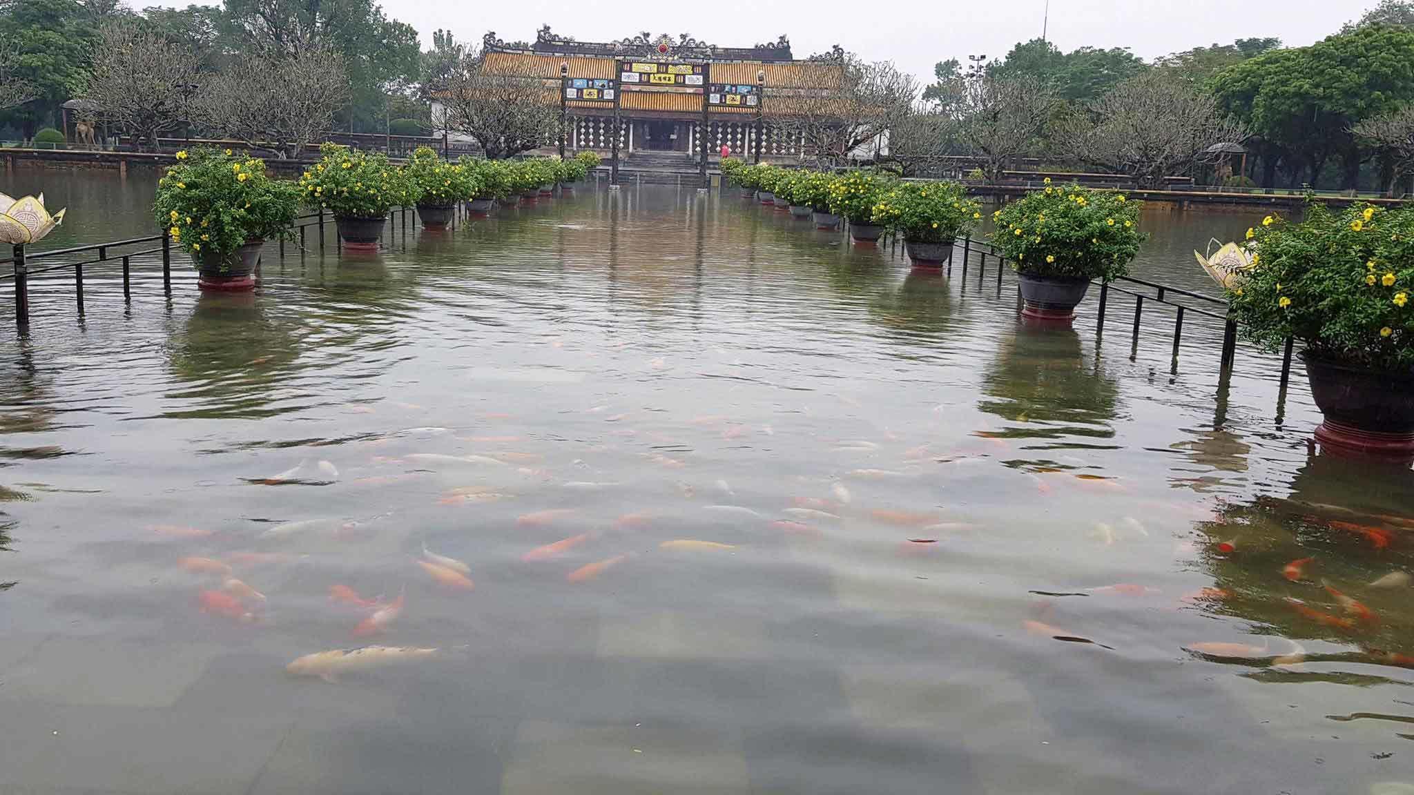 Lũ lụt,mưa lũ,Bão Damrey,Đại nội Huế,Lũ ở TT-Huế,Bão số 12