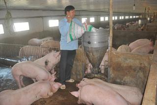 Khủng hoảng thịt lợn: Gửi 'tâm thư' kêu lên Thủ tướng