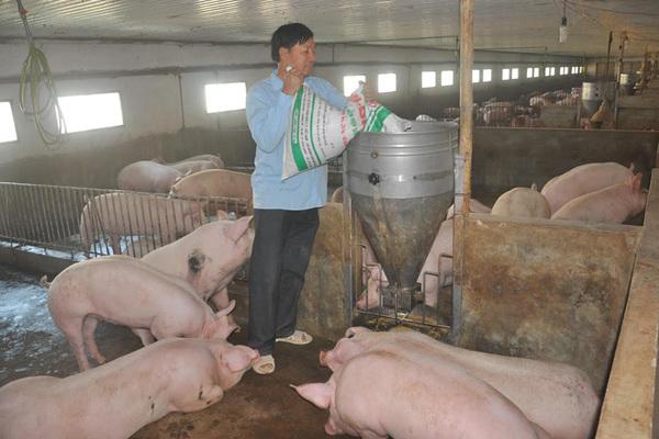 Giá thịt lợn bất ngờ tăng mạnh, trên đà chiếm đỉnh kỷ lục