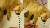 Phì cười với phản ứng của chú chó khi bất ngờ bị đánh thức bởi... kẹo