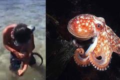 Cậu bé 10 tuổi dùng miệng cắn chết bạch tuộc