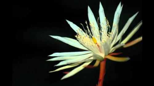 Giật mình với 8 loài hoa đắt nhất thế giới, giá hàng tỷ đồng