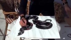 Kinh ngạc với bức tranh 3D vẽ rắn sống động như thật