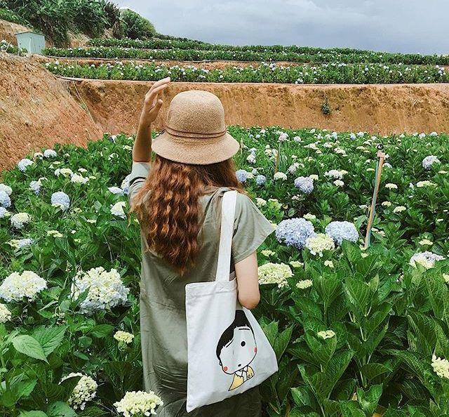 Check - in tại cánh đồng hoa cẩm tú cầu đẹp ngất ngây ở Đà Lạt - ảnh 2