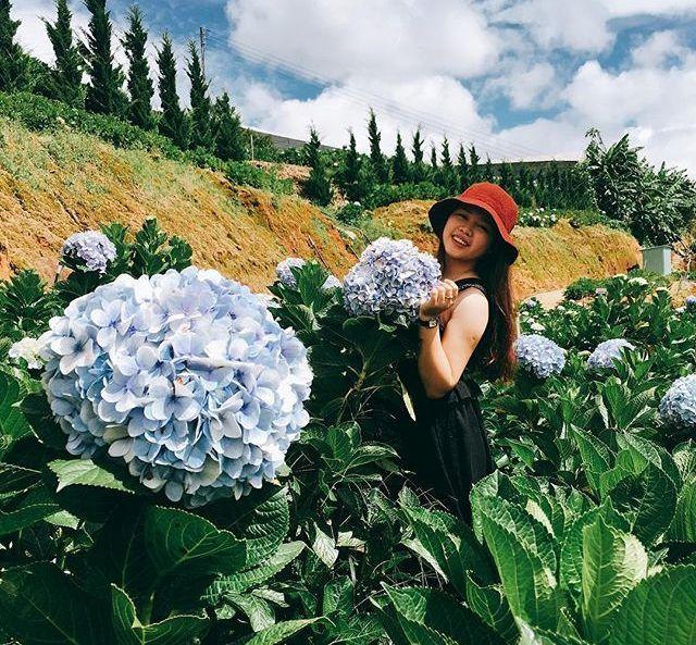 Check - in tại cánh đồng hoa cẩm tú cầu đẹp ngất ngây ở Đà Lạt - ảnh 12