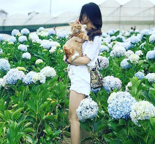 Check - in tại cánh đồng hoa cẩm tú cầu đẹp ngất ngây ở Đà Lạt - ảnh 13