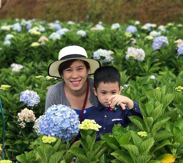 Check - in tại cánh đồng hoa cẩm tú cầu đẹp ngất ngây ở Đà Lạt - ảnh 14