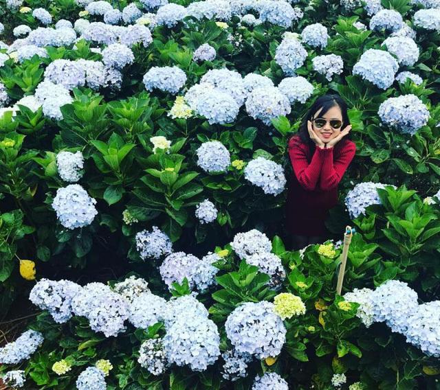 Check - in tại cánh đồng hoa cẩm tú cầu đẹp ngất ngây ở Đà Lạt - ảnh 3