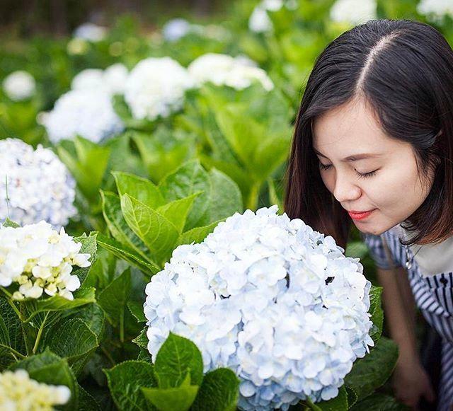 Check - in tại cánh đồng hoa cẩm tú cầu đẹp ngất ngây ở Đà Lạt - ảnh 6