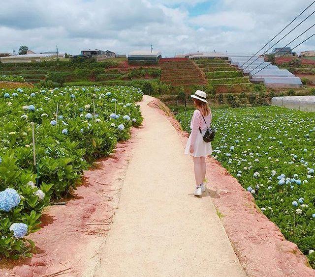 Check - in tại cánh đồng hoa cẩm tú cầu đẹp ngất ngây ở Đà Lạt - ảnh 9