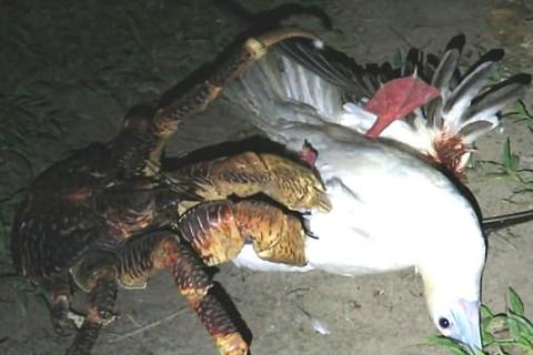 cua dừa