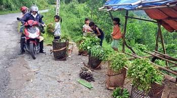 Bí thư Nguyễn Thiện Nhân bàn giải pháp thoát nghèo cho nông thôn-miền núi