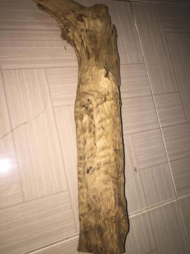 Giá 'trên trời', nhưng gỗ, sản phẩm gỗ từ cây thủy tùng 70% là hàng giả