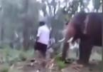 Video: Nghịch dại đu lên vòi voi, bị voi hất văng ra bất tỉnh
