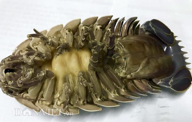 4 loại đặc sản 'siêu độc' hiếm có, khó tìm ở Quy Nhơn