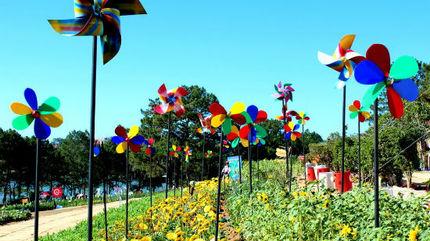 Không có chuyện sử dụng hoa nơi khác làm Festival hoa Đà Lạt