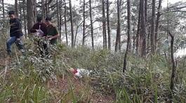 Người đàn ông chết trên đồi thông vắng cạnh chai thuốc sâu