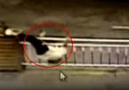 Liều lĩnh trèo qua rào chắn, người phụ nữ gặp tai nạn bất ngờ