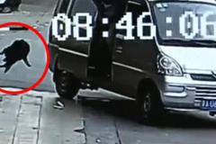 Màn trộm chó trong 2 giây của cẩu tặc