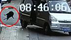 10 clip 'nóng': Màn trộm chó trong 2 giây của cẩu tặc