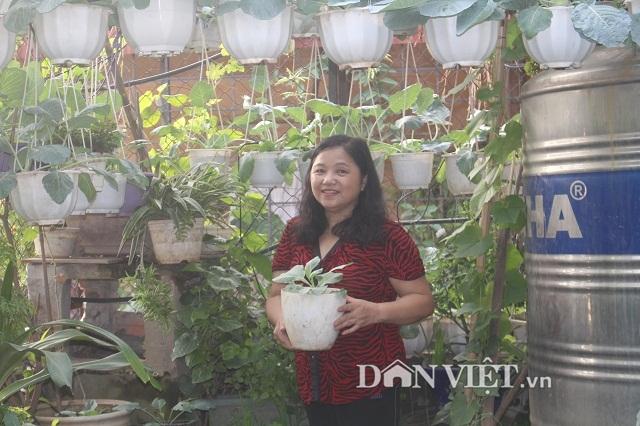 Khu vườn treo 'vạn người mê' tại tầng 4 của cô giáo Hà Nội