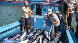 8 Bộ ngành giải cứu tôm cá Việt bị phạt 'thẻ vàng'