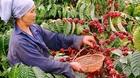 Xuất khẩu hàng đầu thế giới, lo xây dựng cà phê Việt chất lượng cao