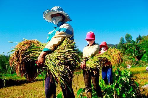 Tạo sinh kế để giảm nghèo bền vững