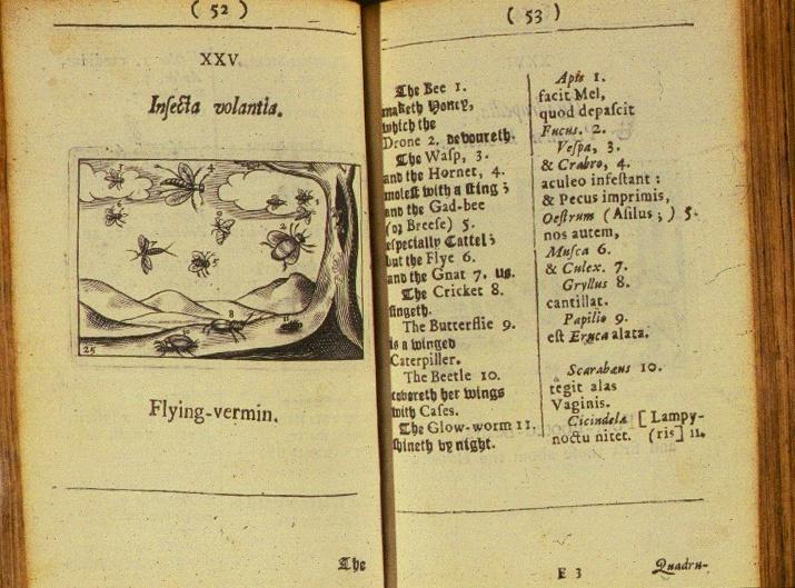 Vị mục sư khai sinh ra sách giáo khoa có hình minh họa