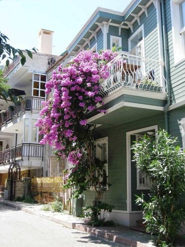 nhà đẹp,trang trí ban công,ban công,vườn hoa ban công